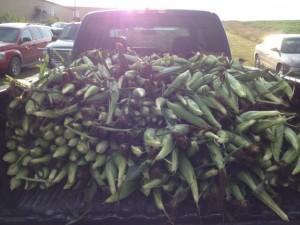 FFA Sweet Corn 14