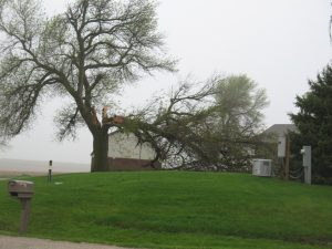 Large tree branch falls during Wednesday's storm about 2-miles west of the Hwy 92/71 intersection in Cass County. (Ric Hanson/photo)
