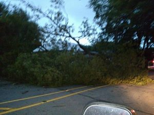 Huge tree down south of the intersection of 7th & Olive just before 8-p.m. Thursday, blocked the southbound lane. (Ric Hanson photo)